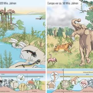 Wissenschaftliche Illustration